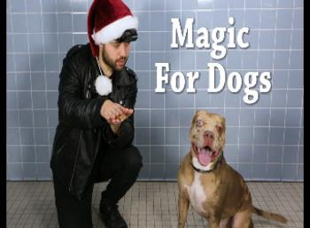 The Adorable Dogs reactions To Magician's Tricks in an Animal Shelter