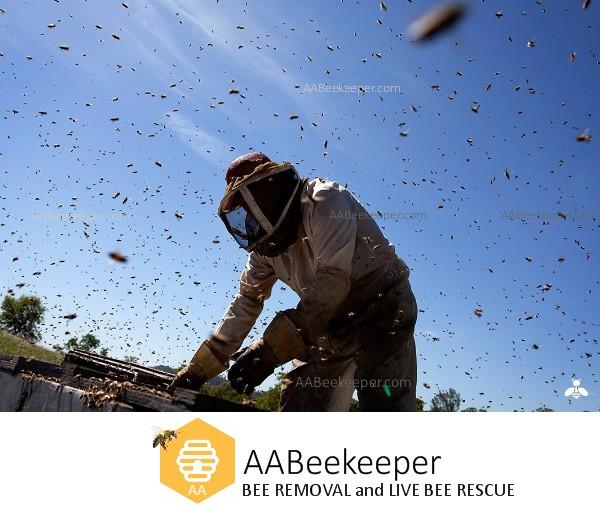 Beekeeper Bee Removal.