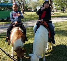 Ponies petting zoo rentals in south florida | pony rides