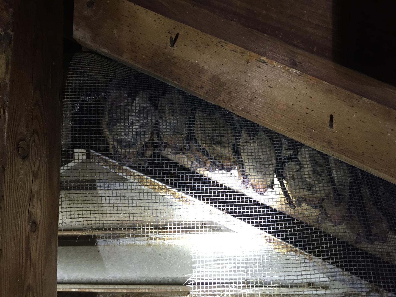 frankfort wildlife removal lexington ky