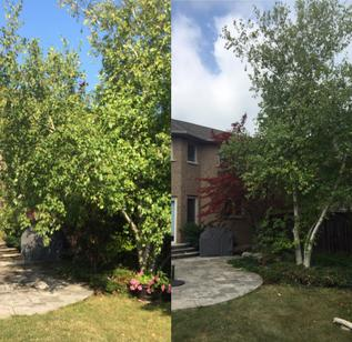 b&a of Birch Tree Trimming, Grimsby Tree Trimming Service