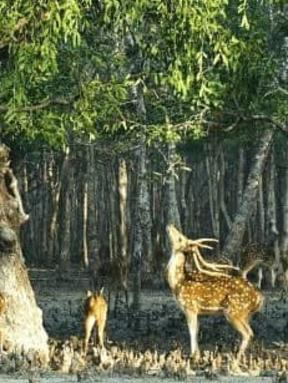1 night 2 days sundarban tour itinerary