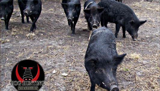 Hog and Boar Hunting Trips
