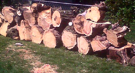 Storm damage clean up, stacked bucked wood