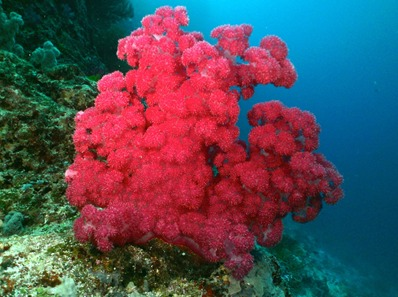 Soft Coral picture from Madison WI scuba diver
