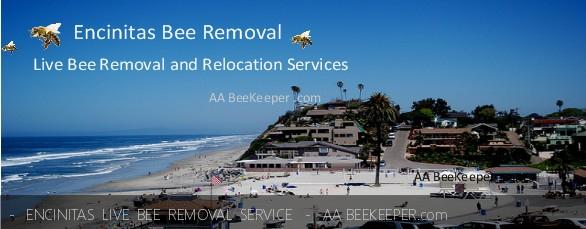 Encinitas Bee Removal and beekeeper