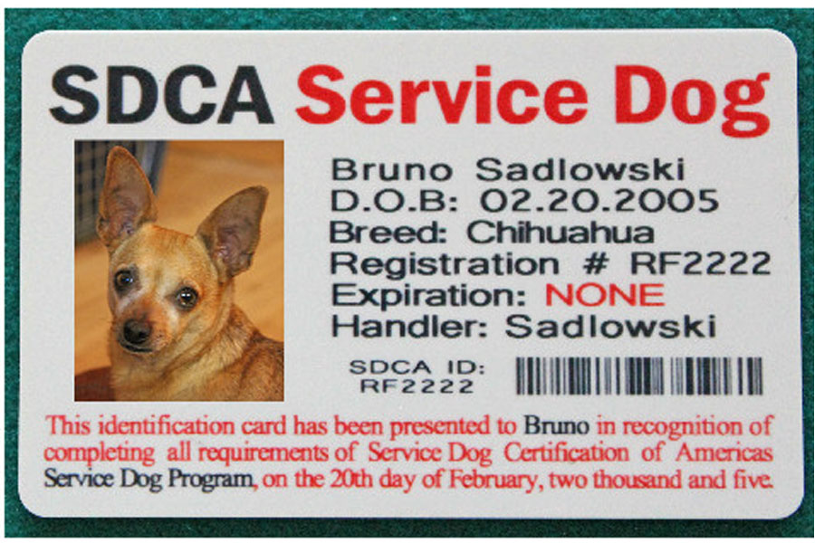 Service Dog Certification Usa Service Dogs Oukasfo