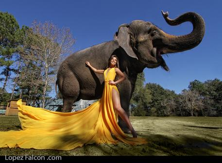 elephant photo shoot quinceanera sweet 15 quinceanera miami elefante quince sweet 16 indian bollywood india