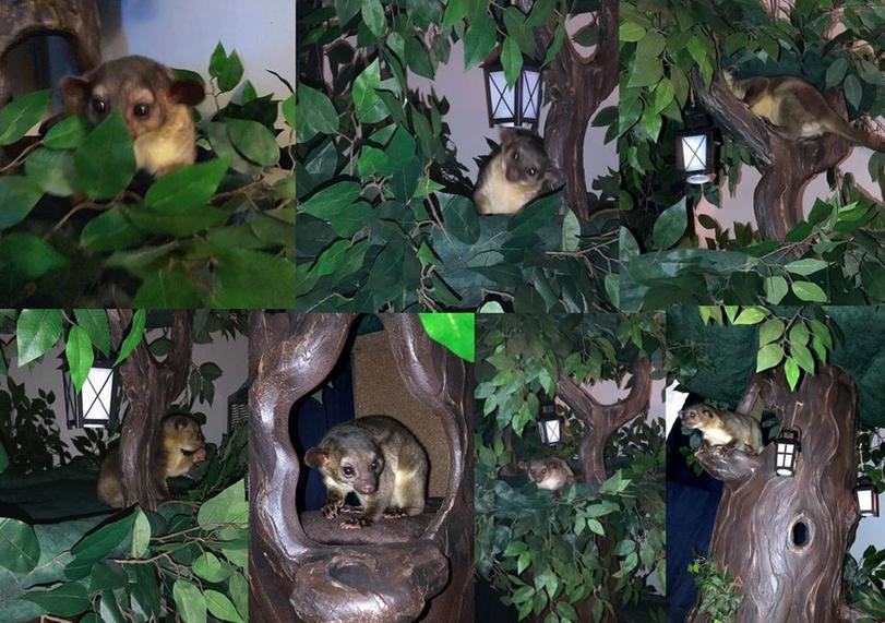 Exotic Pet Trees