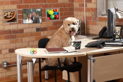 Pet Sitting Business Education