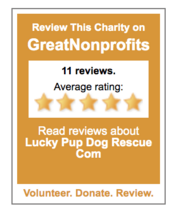 lucky pup dog rescue reviews