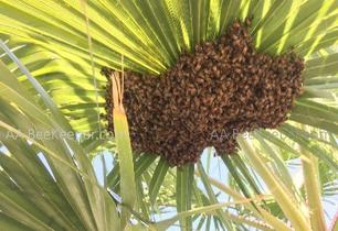 Bee Removal Lake Elsinore Bee Keeper