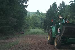 Kentucky deer food plots
