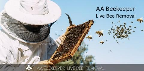 Thousand Palms Bee Removal Services