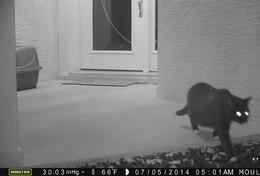 PET PI caught lost cat Molly on cam