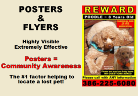 Lost Pet Poster and Flyer design by PET PI