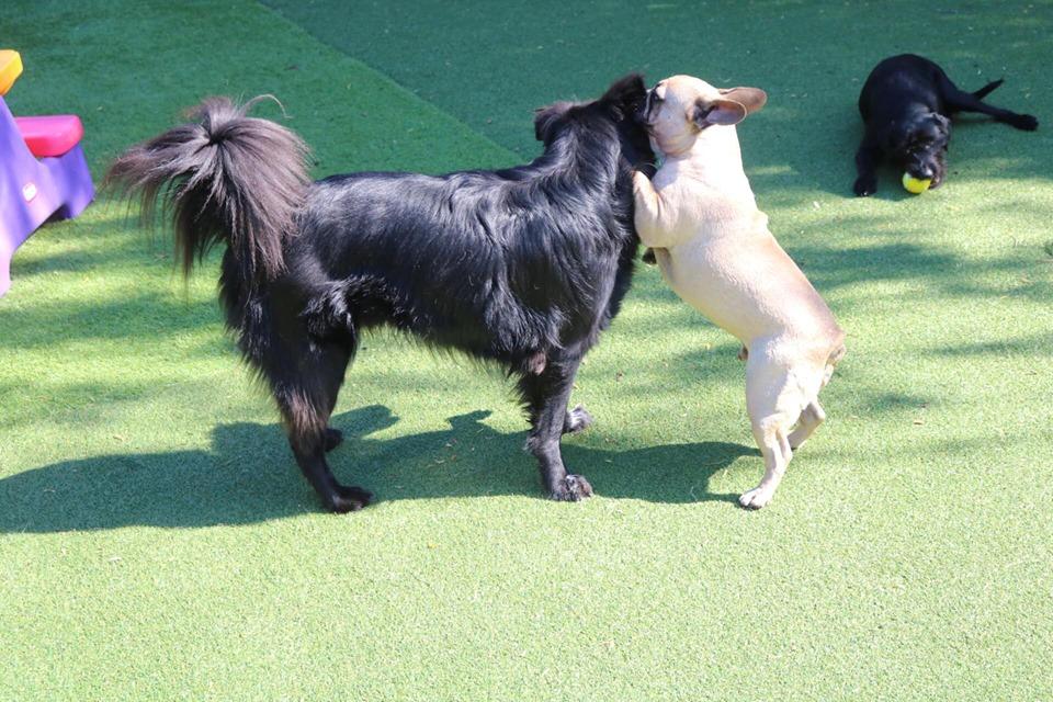 Dog Daycare, Dog Boarding - Adele's Doggie Daycare - Surrey, Bc