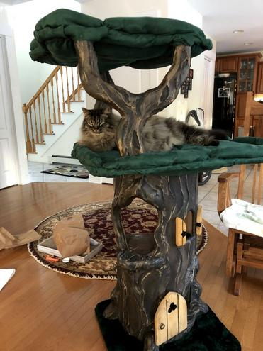 Extra Large Cat Trees for Large Cats