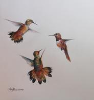 Flight, 14 x 11 colored pencil drawing of hummingbirds by Lindy Cook Severns