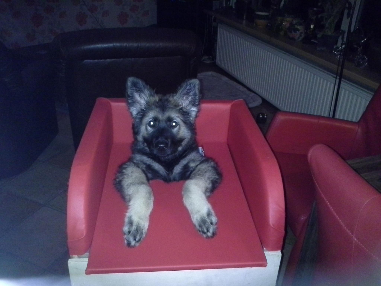 Dogs Megaesophagus Bailey Chair