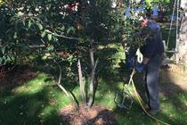 Tree Fertilization Simsbury CT