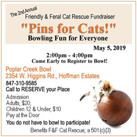 Friendly & Feral Cat Rescue 2nd Annual Fundraiser Promo | Golf Rose Animal Services