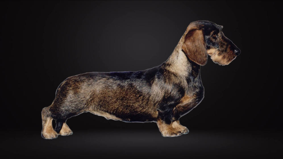 Jeric's Wirehaired Dachshunds - Home