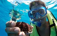 see underwater urchins snorkeling with hawaiu nautical