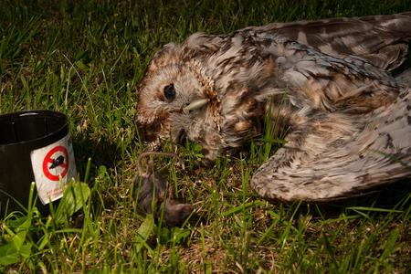 Night Owls May Face Special Challenges >> Challenges Owls Face