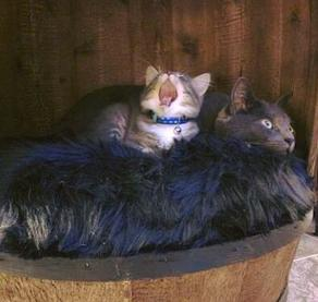 Whiskey Barrel Cat Condo