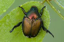 Stock nature photography - beetle