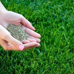 Richmond Mowing - Aeration and Seeding Lawn Care