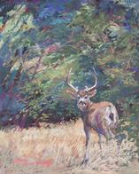 King of the Mountain, wildlife pastel by Texas artist Lindy Cook Severns, Old Spanish Trail Studio, Fort Davis TX. Mule deer buck in the Davis Mts.