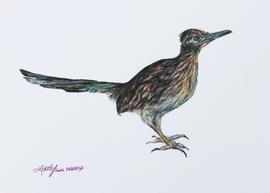 Roadrunner, colored pencil drawing by Lindy C Severns