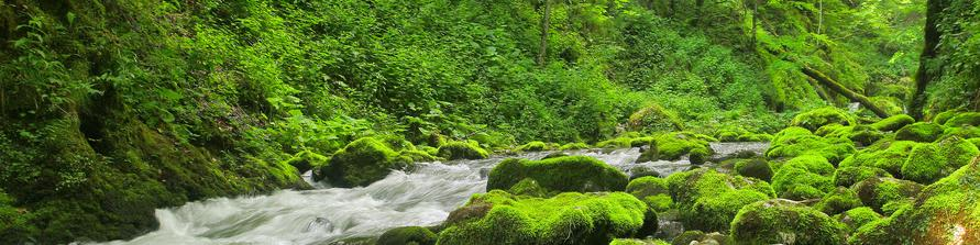 mossy stream, natural place, oregon