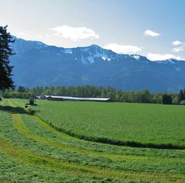 Fraser Valley Tall Fescue Grass Blend