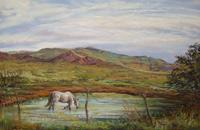 A Long,Cool Drink, horse wading in ranch tank pastel landscape by Lindy C Severns