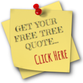 Get Your Free Tree Quote! CLICK HERE