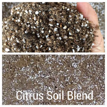citrus and fruit tree soil blend for potted plants and trees