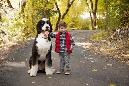 stabdard bernedoodle and boy