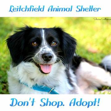 Leitchfield Animal Services