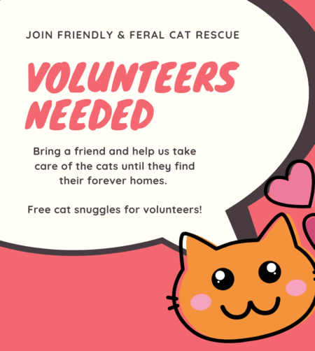 Volunteers Needed at Friendly & Feral Cat Rescue | Golf Rose Animal Services