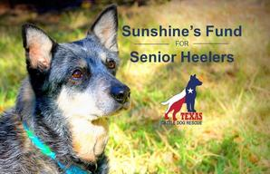 TCDR Sunshine's Fund for Senior Heelers