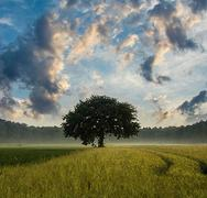 Landscape Image of a tree on a hill