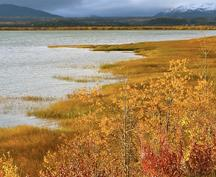 Fall is our favorite time of year for a road trip in the Alaska and Yukon to see stunning reds golds and yellows