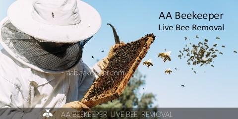 La Jolla bee removal and La Jolla beekeeper