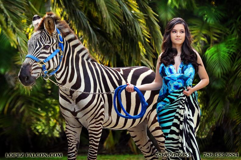 quinceanera with zebra cebra quinces horse miami xv anos quince photography
