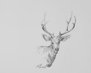 The Regal One, mule deer buck graphite drawing by Texas artist Lindy C Severns