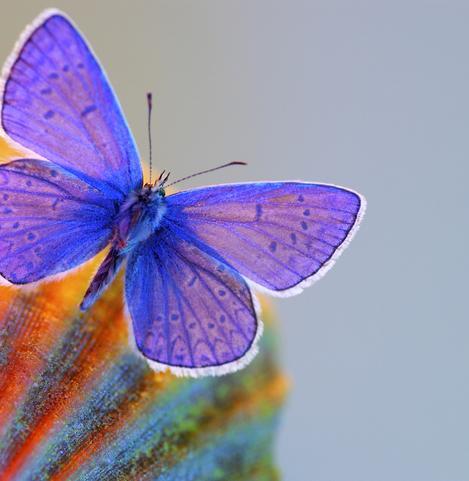 Resultado de imagem para crystal butterfly