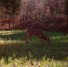 kentucky deer hunting